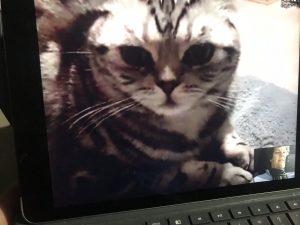 Skype mit meiner Lieblingskatze.