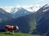 Zillertal 2013 - ein ungewohnt leiser Urlaub in Finkenberg, zwischen Mayrhofen und dem Hintertuxer Gletscher.