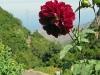 Gomera 2011 - Wanderung durch den Nationalpark bis El Cedro